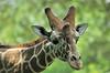Zoo Life :