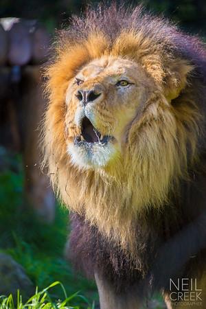 Zoo Michael's Birthday - 140914