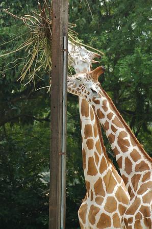 Zoo Negara Visit 2006