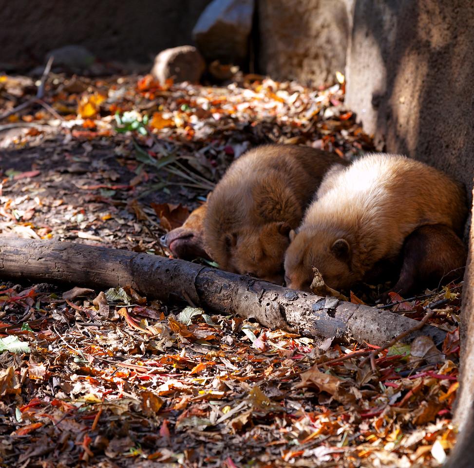 St. Louis Zoo, October, 2012
