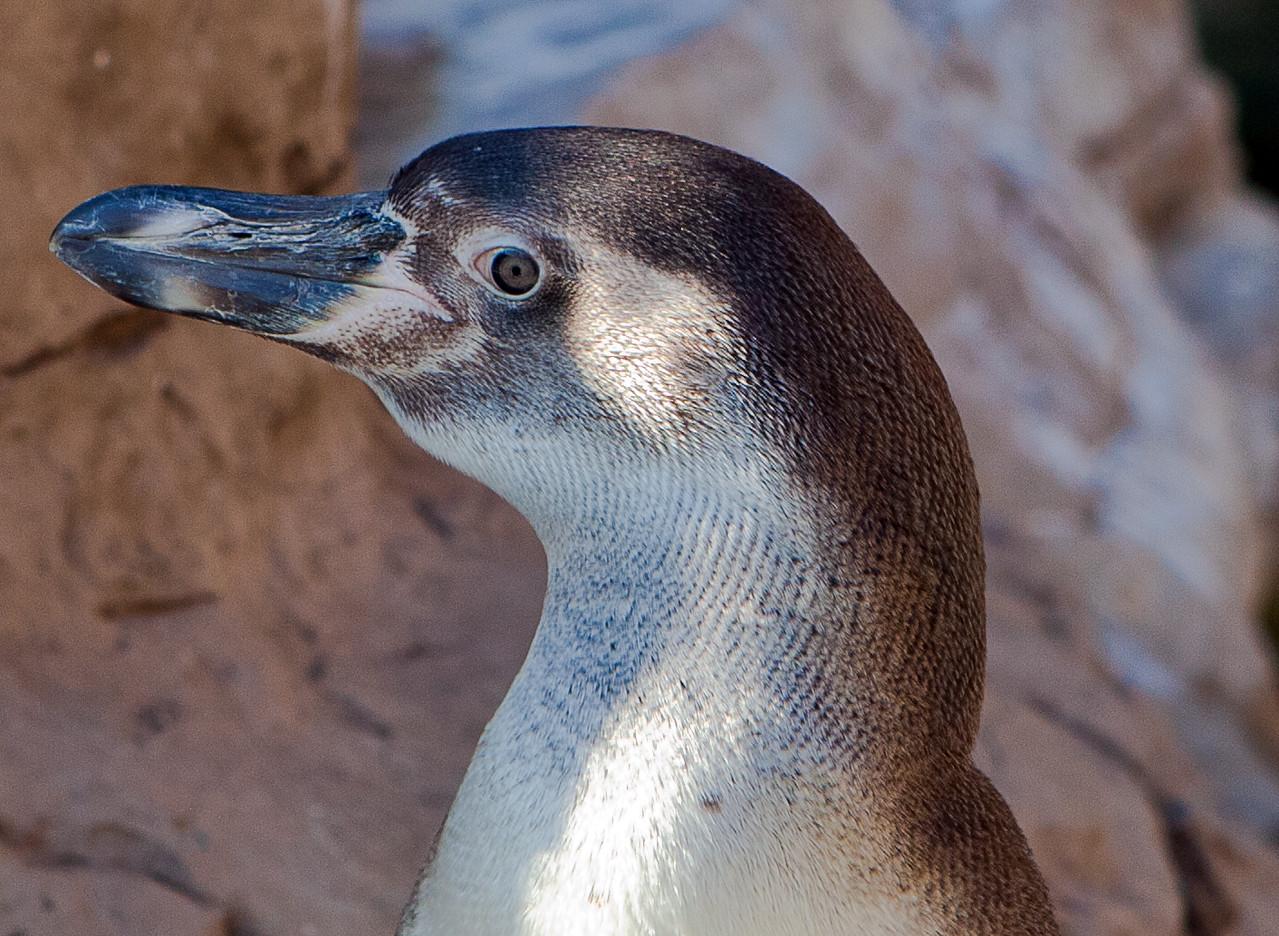 St. Louis Zoo - Winter 2011