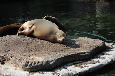 2008_09_25_M V R_10819 JPG_Artis Zoo