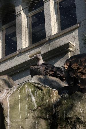 2008_09_25_M V R_10911 JPG_Artis Zoo