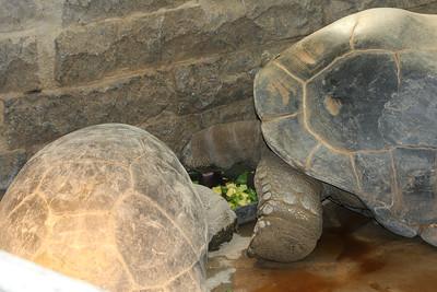 2008_09_25_M V R_10742 JPG_Artis Zoo