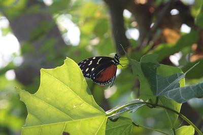 2008_09_25_M V R_10812 JPG_Artis Zoo
