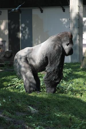 2008_09_25_M V R_10835 JPG_Artis Zoo