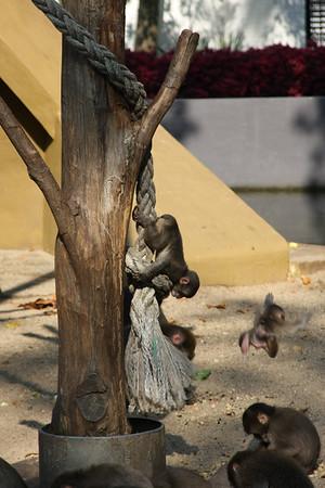 2008_09_25_M V R_10726 JPG_Artis Zoo