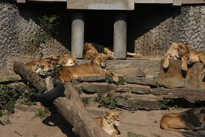 2008_09_25_M V R_10795 JPG_Artis Zoo
