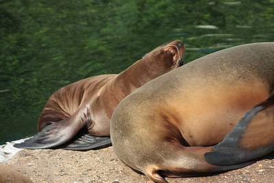 2008_09_25_M V R_10824 JPG_Artis Zoo