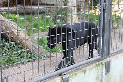 2008_09_25_M V R_10906 JPG_Artis Zoo
