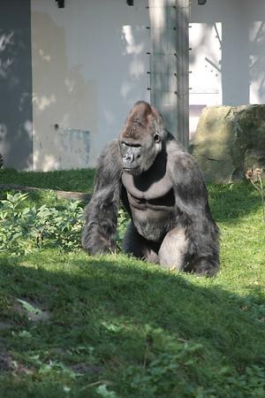 2008_09_25_M V R_10833 JPG_Artis Zoo