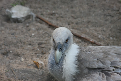 2008_09_25_M V R_10904 JPG_Artis Zoo