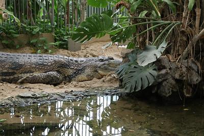 2008_09_25_M V R_10751 JPG_Artis Zoo