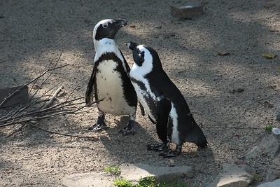 2008_09_25_M V R_10849 JPG_Artis Zoo