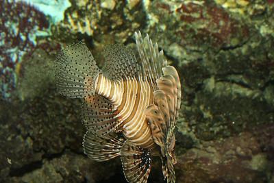 2008_09_25_M V R_10879 JPG_Artis Zoo