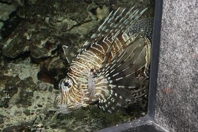 2008_09_25_M V R_10877 JPG_Artis Zoo