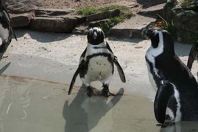 2008_09_25_M V R_10844 JPG_Artis Zoo