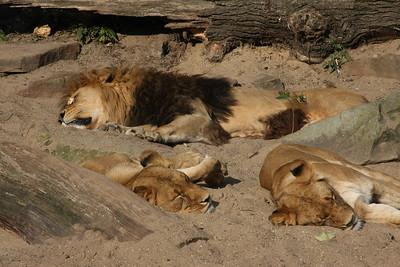 2008_09_25_M V R_10914 JPG_Artis Zoo