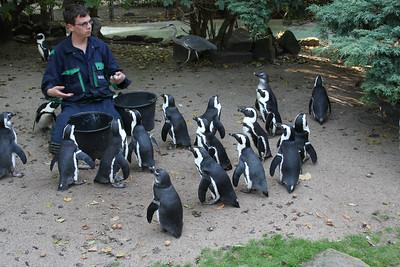 2008_09_25_M V R_10899 JPG_Artis Zoo