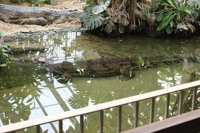 2008_09_25_M V R_10752 JPG_Artis Zoo