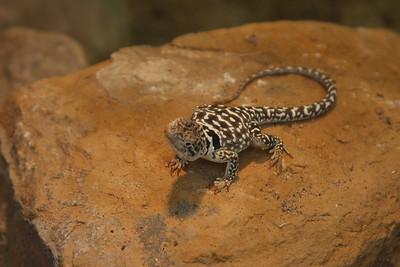 2008_09_25_M V R_10761 JPG_Artis Zoo