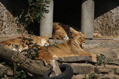 2008_09_25_M V R_10792 JPG_Artis Zoo