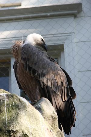 2008_09_25_M V R_10907 JPG_Artis Zoo