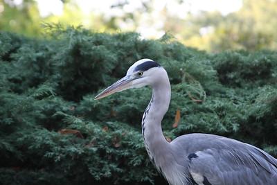 2008_09_25_M V R_10892 JPG_Artis Zoo
