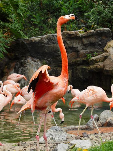 Flamingos at LA Zoo - 5 July 2010