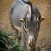 LA Zoo - 12 Jan 2014