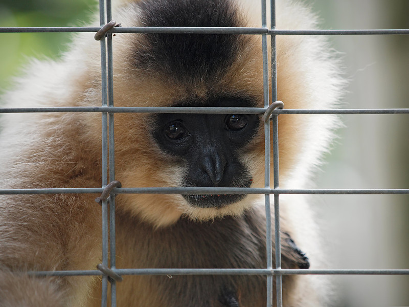 San Diego Wild Animal Park - 11 Apr 2010