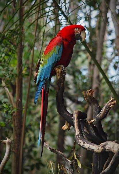 Wild Animal Park - 11 Apr 2010