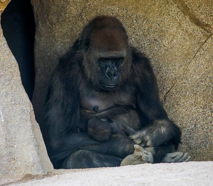 Safari Park - 24 Apr 2014