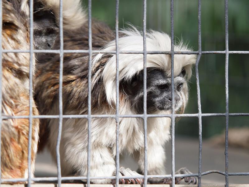 Santa Ana Zoo - 10 Jan 2010