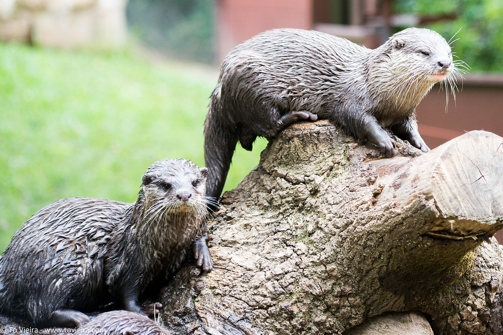 Zoo Santo Inácio<br /> Gaia-Porto