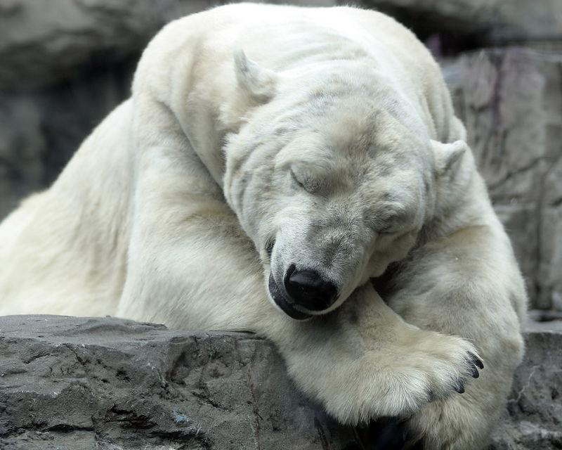 PolarBear1063