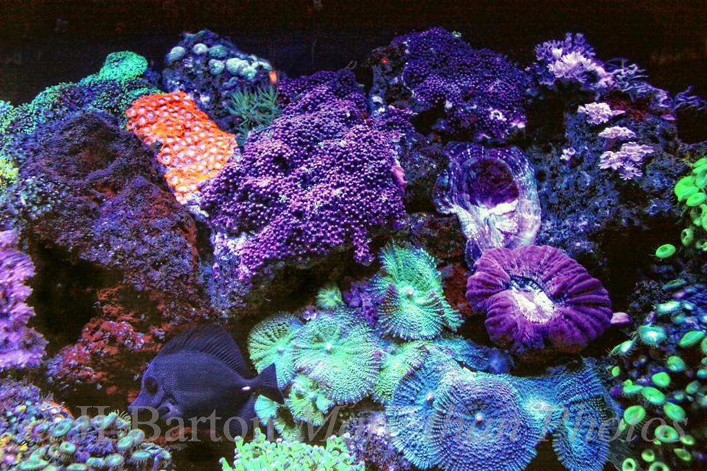 various coral
