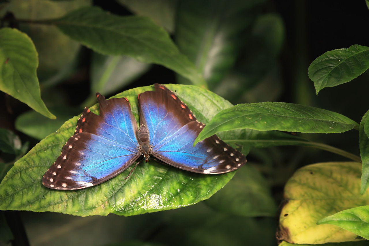 A butterfly at the Chester Zoo
