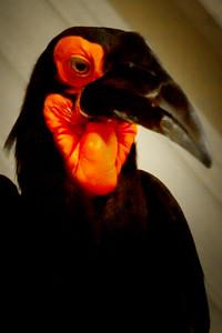 Bird (needs identification)