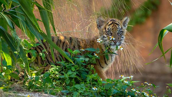 Zoo Miami 2016