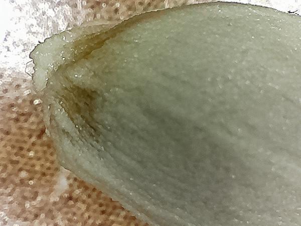 Navel orange seed.