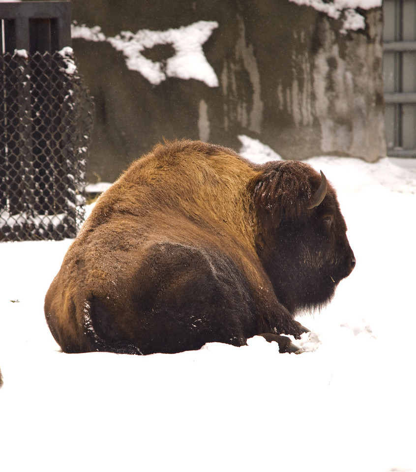 Detroit Zoo - Feb 2009-125