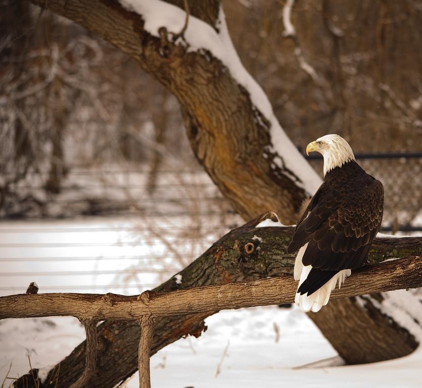 Detroit Zoo - Feb 2009-119