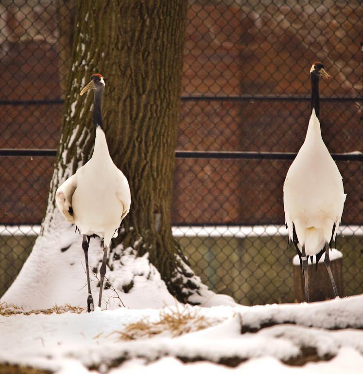 Detroit Zoo - Feb 2009-124