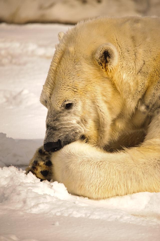 Detroit Zoo - Feb 2009-100