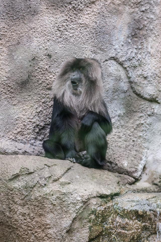 Det Zoo 2014-16