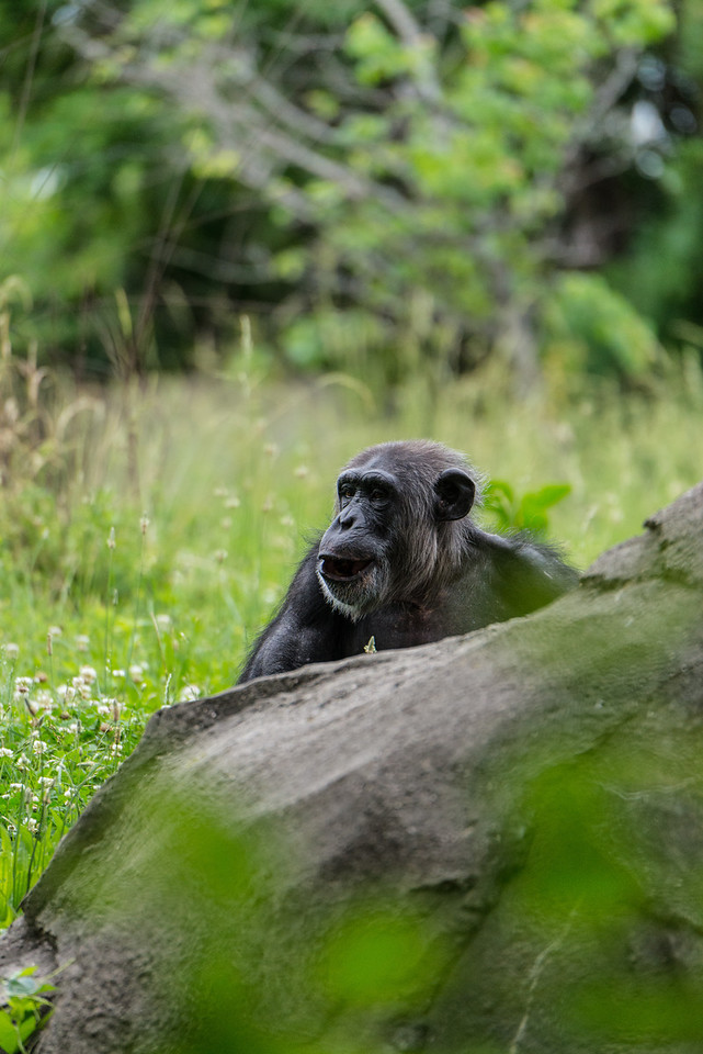 Det Zoo 2014-21