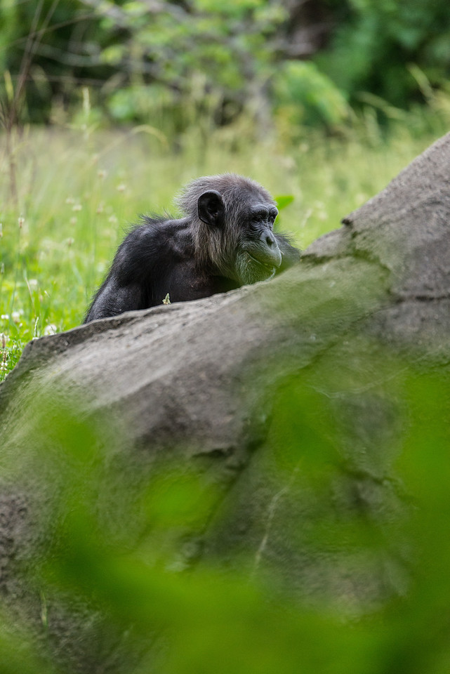 Det Zoo 2014-19