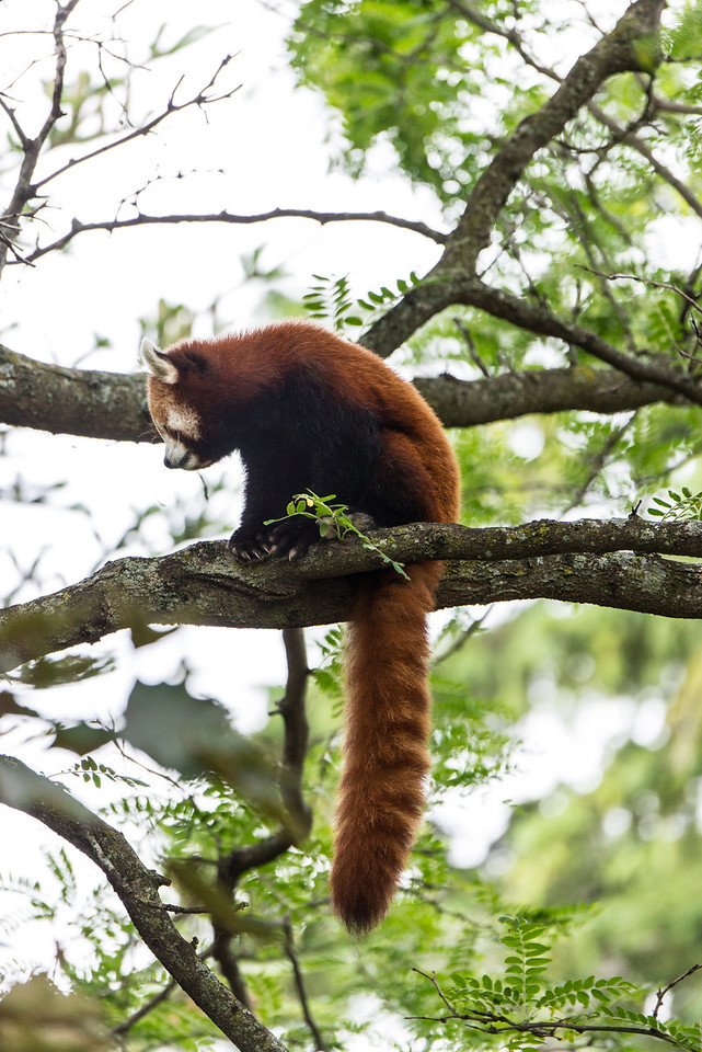 Det Zoo 2014-10
