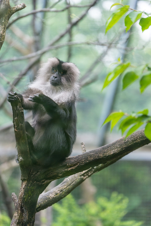 Det Zoo 2014-15